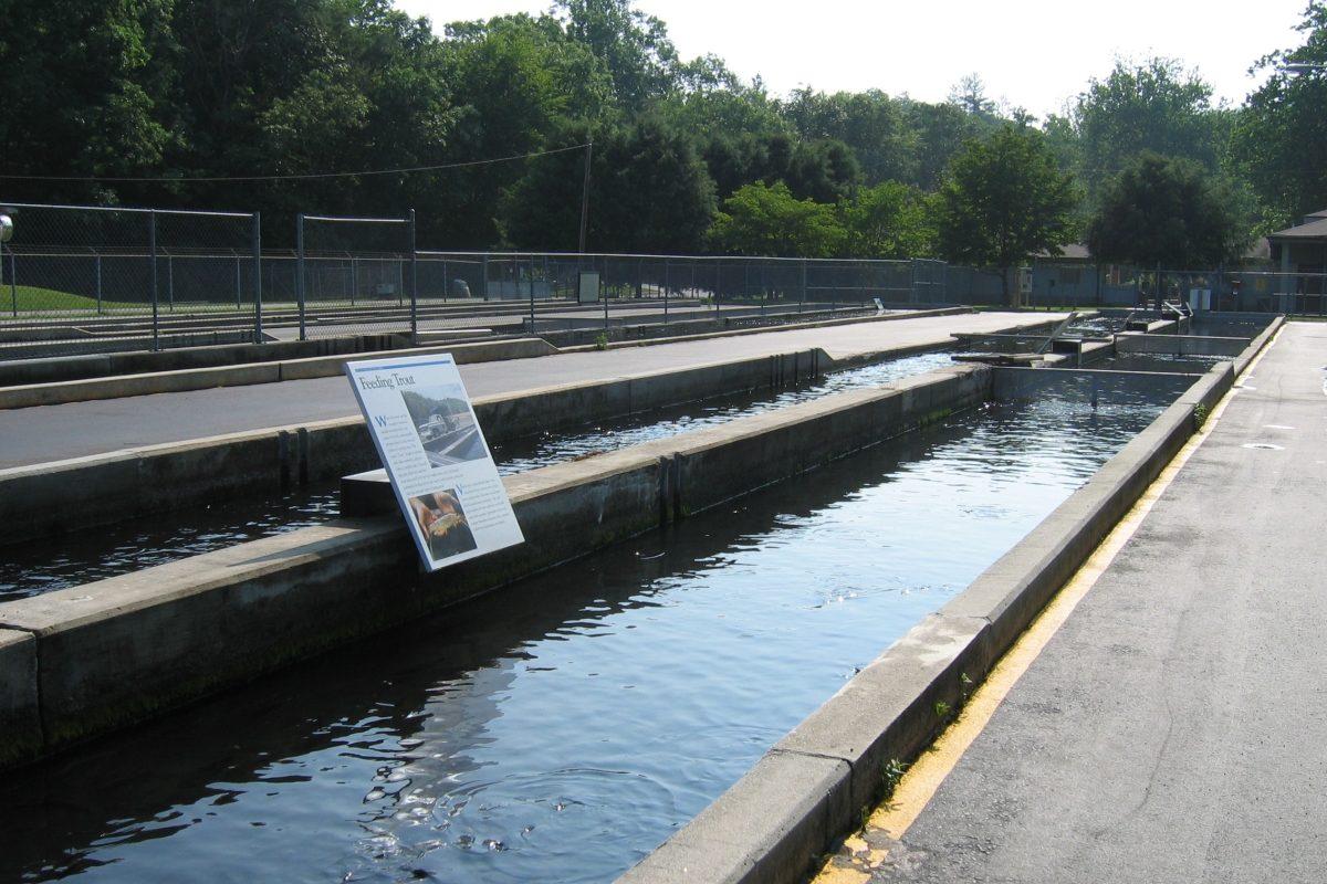 fishhatcherytroutraceway