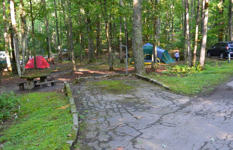 Camping in National Forests In North Carolina » Carolina